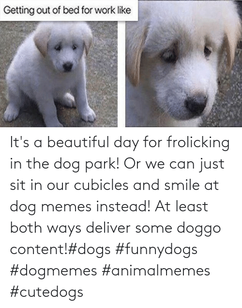 deliver: It's a beautiful day for frolicking in the dog park! Or we can just sit in our cubicles and smile at dog memes instead! At least both ways deliver some doggo content!#dogs #funnydogs #dogmemes #animalmemes #cutedogs