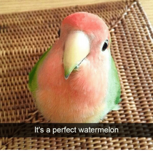 Watermelon, Perfect, and Its A: It's a perfect watermelon