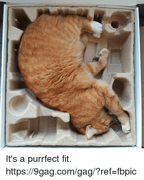 9gag, Dank, and 🤖: It's a purrfect fit. https://9gag.com/gag/?ref=fbpic