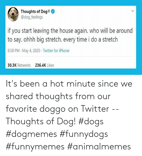 Dogs: It's been a hot minute since we shared thoughts from our favorite doggo on Twitter -- Thoughts of Dog! #dogs #dogmemes #funnydogs #funnymemes #animalmemes