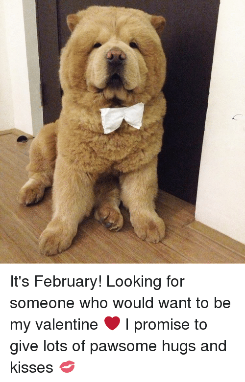 hugs and kisses: It's February! Looking for someone who would want to be my valentine ❤ I promise to give lots of pawsome hugs and kisses 💋