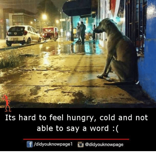 Hungry, Memes, and Word: Its hard to feel hungry, cold and not  able to say a word :(  /didyouknowpagel@didyouknowpage