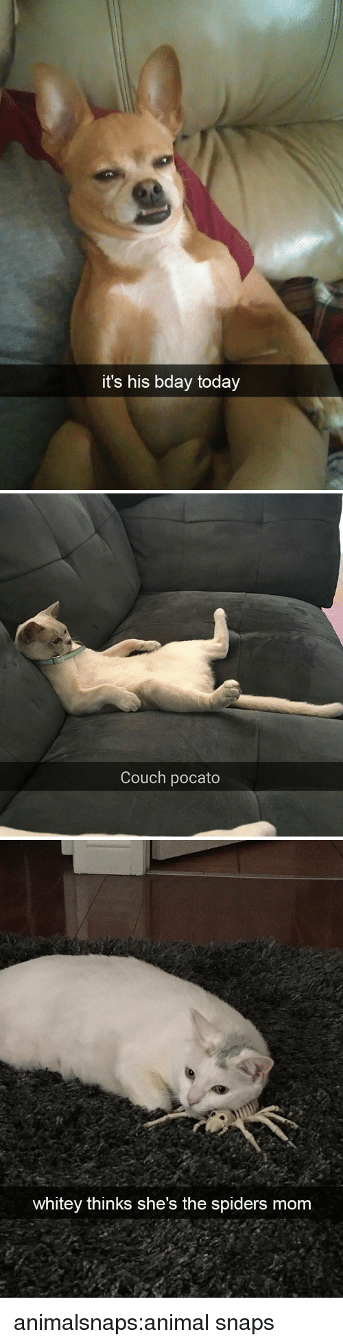 Target, Tumblr, and Animal: it's his bday today   Couch pocato   whitey thinks she's the spiders mom animalsnaps:animal snaps