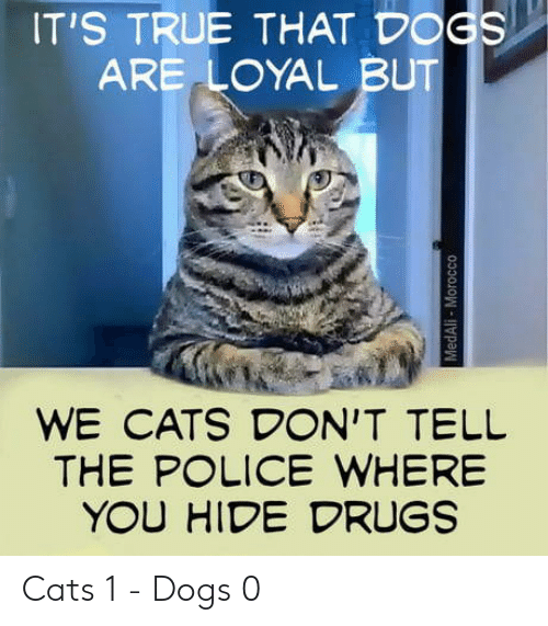 Lice: IT'S TRUE THAT D GS  ARE LOYAL BUT  WE CATS DON'T TELIL  THE P LICE WHERE  YOU HIDE DRUGS Cats 1 - Dogs 0