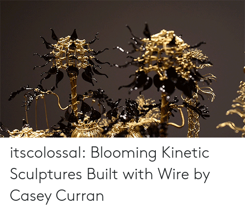 Tumblr, Blog, and Http: itscolossal: Blooming Kinetic Sculptures Built with Wire by Casey Curran