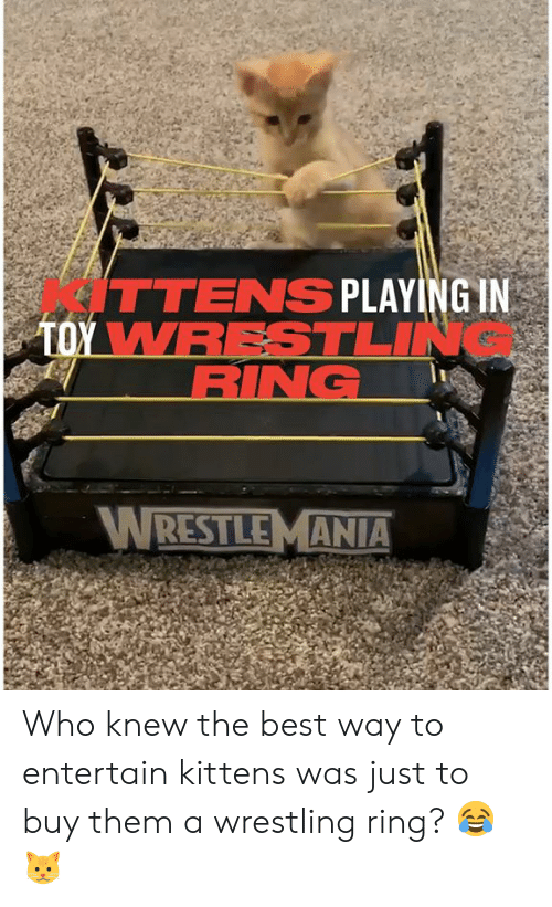 Wrestlemania: ITTENS PLAYING IN  TOY WRESTLIN  RING  WRESTLEMANIA Who knew the best way to entertain kittens was just to buy them a wrestling ring? 😂🐱