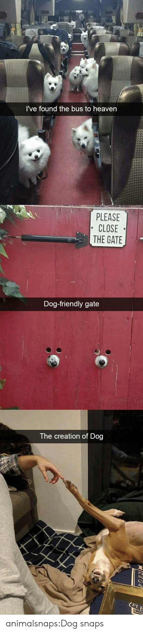 Heaven, Target, and Tumblr: I've found the bus to heaven   PLEASE  CLOSE  THE GATE  Dog-friendly gate   The creation of Dog  St  FLE animalsnaps:Dog snaps