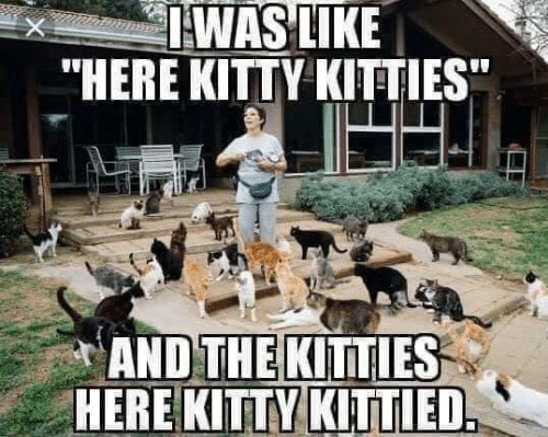 "Kitties: IWAS LIKE  ""HERE KITTY KITTIES  AND THE KITTIES  HERE KITTY KITTIED"