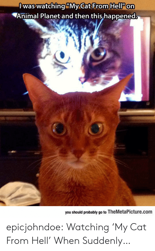 Animal Planet, Tumblr, and Animal: Iwas watching MyCat From HellP on  Animal Planet and then this happened  you should probably go to TheMetaPicture.com epicjohndoe:  Watching 'My Cat From Hell' When Suddenly…