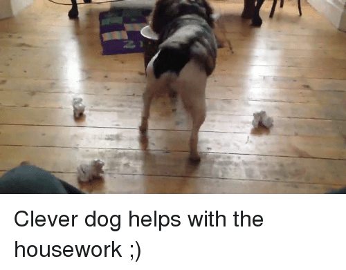 Housework: j, Clever dog helps with the housework ;)