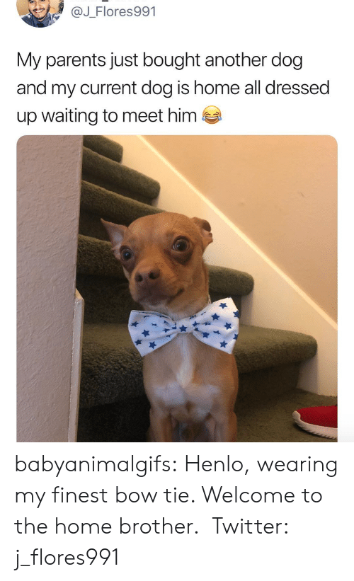 Parents, Tumblr, and Twitter: @J_Flores991  My parents just bought another dog  and my current dog is home all dressed  up waiting to meet him  es babyanimalgifs: Henlo, wearing my finest bow tie. Welcome to the home brother.  Twitter: j_flores991