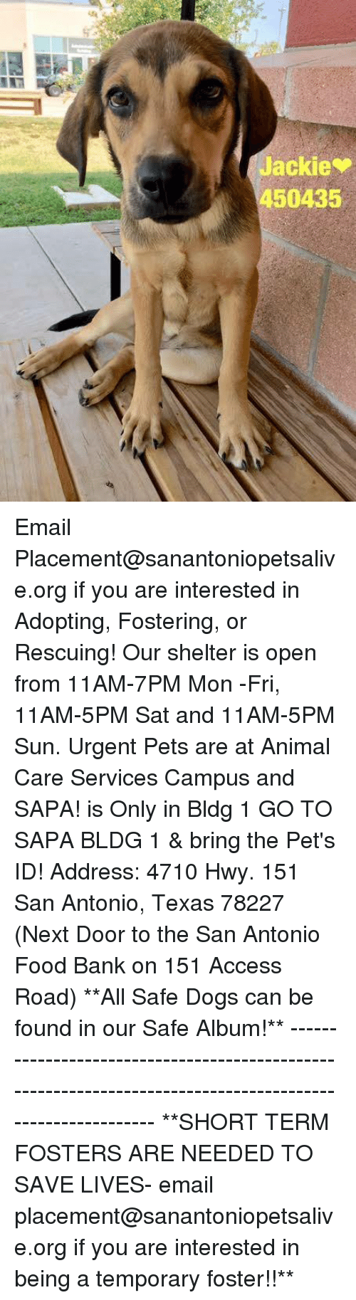 shortness: Jackie  450435 Email Placement@sanantoniopetsalive.org if you are interested in Adopting, Fostering, or Rescuing!  Our shelter is open from 11AM-7PM Mon -Fri, 11AM-5PM Sat and 11AM-5PM Sun.  Urgent Pets are at Animal Care Services Campus and SAPA! is Only in Bldg 1 GO TO SAPA BLDG 1 & bring the Pet's ID! Address: 4710 Hwy. 151 San Antonio, Texas 78227 (Next Door to the San Antonio Food Bank on 151 Access Road)  **All Safe Dogs can be found in our Safe Album!** ---------------------------------------------------------------------------------------------------------- **SHORT TERM FOSTERS ARE NEEDED TO SAVE LIVES- email placement@sanantoniopetsalive.org if you are interested in being a temporary foster!!**