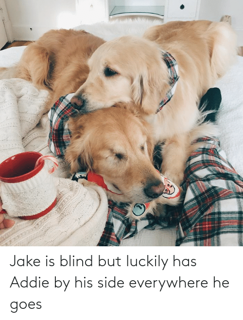 Goes: Jake is blind but luckily has Addie by his side everywhere he goes