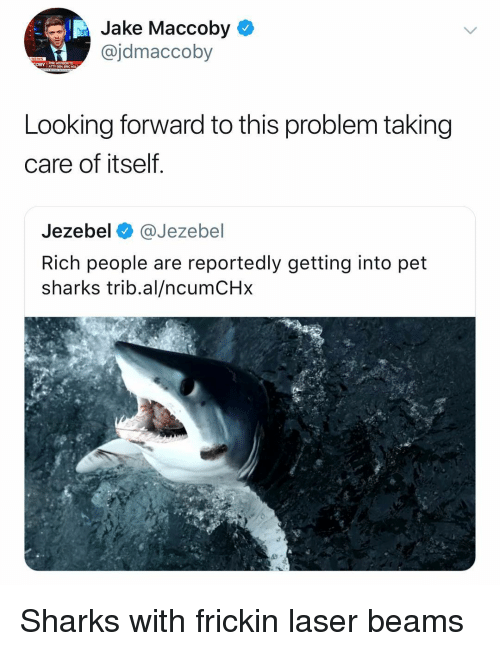 Jezebel, Sharks, and Dank Memes: Jake Maccoby  @jdmaccoby  OBYAGEN ERIC H  Looking forward to this problem taking  care of itself  Jezebel @Jezebel  Rich people are reportedly getting into pet  sharks trib.al/ncumCHx Sharks with frickin laser beams