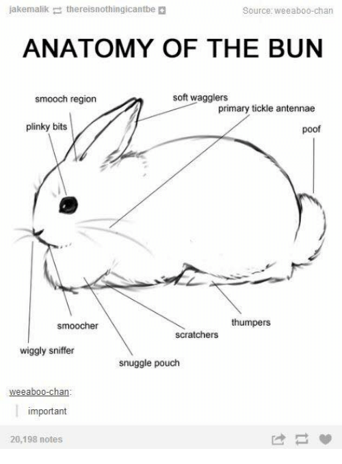 Poofes: jakemalik  the reisnothingicantbe  Source: Weeabo0-chan  ANATOMY OF THE BUN  soft wagglers  smooch region  primary tickle antennae  plinky bits  poof  thumpers  smoocher  scratchers  wiggly sniffer  snuggle pouch  eeaboo-chan  important  20,198 notes