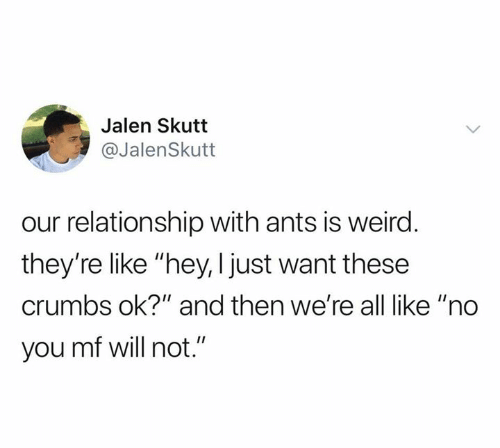 "Ok And: Jalen Skutt  @JalenSkutt  our relationship with ants is weird.  they're like ""hey, I just want these  crumbs ok?"" and then we're all like ""no  you mf will not."""