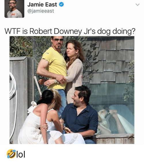 Memes, Robert Downey Jr., and Wtf: Jamie East  @jamieeast  WTF is Robert Downey Jr's dog doing? 🤣lol