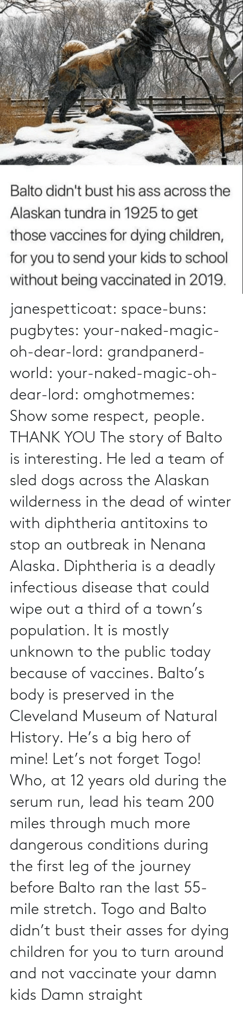 team: janespetticoat: space-buns:  pugbytes:   your-naked-magic-oh-dear-lord:  grandpanerd-world:   your-naked-magic-oh-dear-lord:  omghotmemes: Show some respect, people.  THANK YOU   The story of Balto is interesting. He led a team of sled dogs across the Alaskan wilderness in the dead of winter with diphtheria antitoxins to stop an outbreak in Nenana Alaska. Diphtheria is a deadly infectious disease that could wipe out a third of a town's population. It is mostly unknown to the public today because of vaccines. Balto's body is preserved in the Cleveland Museum of Natural History.   He's a big hero of mine!   Let's not forget Togo! Who, at 12 years old during the serum run, lead his team 200 miles through much more dangerous conditions during the first leg of the journey before Balto ran the last 55-mile stretch.   Togo and Balto didn't bust their asses for dying children for you to turn around and not vaccinate your damn kids    Damn straight