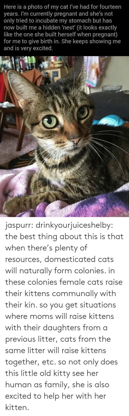 From: jaspurr:  drinkyourjuiceshelby:    the best thing about this is that when there's plenty of resources, domesticated cats will naturally form colonies. in these colonies female cats raise their kittens communally with their kin. so you get situations where moms will raise kittens with their daughters from a previous litter, cats from the same litter will raise kittens together, etc. so not only does this little old kitty see her human as family, she is also excited to help her with her kitten.