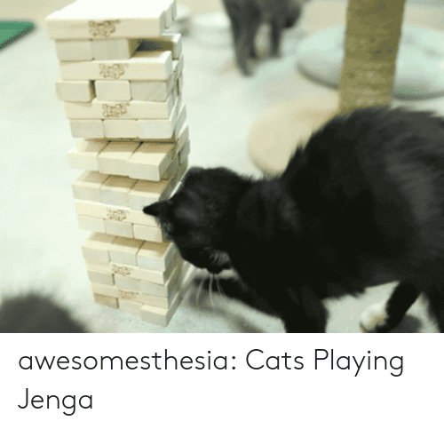 Cats, Tumblr, and Blog: Jenpe awesomesthesia:  Cats Playing Jenga