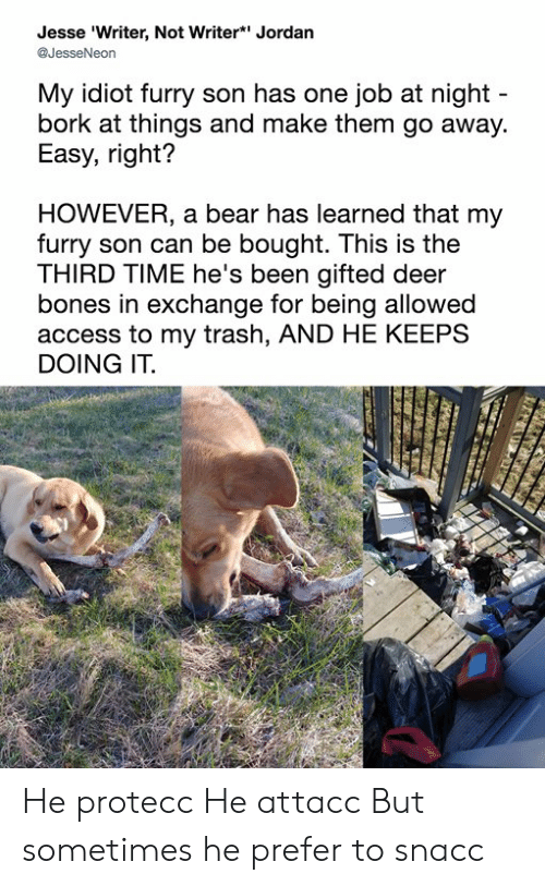 Bones, Dank, and Deer: Jesse 'Writer, Not Writer* Jordan  @JesseNeon  My idiot furry son has one job at night  bork at things and make them go away.  Easy, right?  HOWEVER, a bear has learned that my  furry son can be bought. This is the  THIRD TIME he's been gifted deer  bones in exchange for being allowed  access to my trash, AND HE KEEPS  DOING IT. He protecc He attacc But sometimes he prefer to snacc