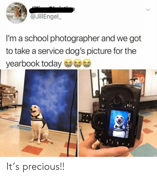 Dogs, Precious, and School: @JillEngel  I'm a school photographer and we got  to take a service dog's picture for the  yearbook today It's precious!!