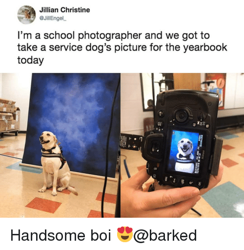 Dogs, Memes, and School: Jillian Christine  @JillEngel,  l'm a school photographer and we got to  take a service dog's picture for the yearbook  today Handsome boi 😍@barked