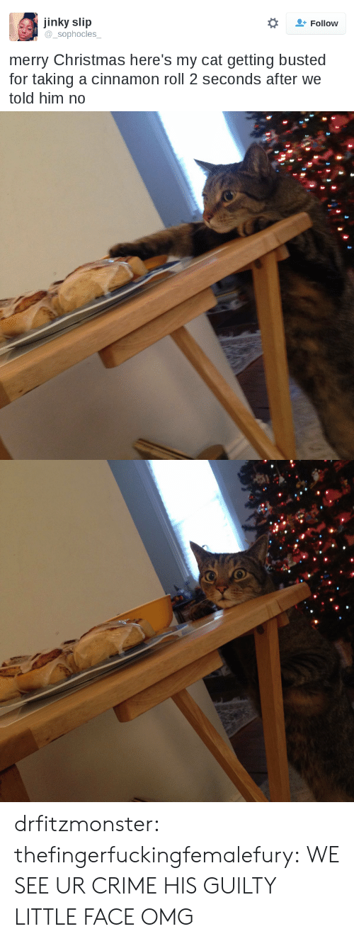 Told Him: jinky slip  sophocles  Follow  merry Christmas here's my cat getting busted  for taking a cinnamon roll 2 seconds after we  told him no drfitzmonster: thefingerfuckingfemalefury:  WE SEE UR CRIME   HIS GUILTY LITTLE FACE OMG