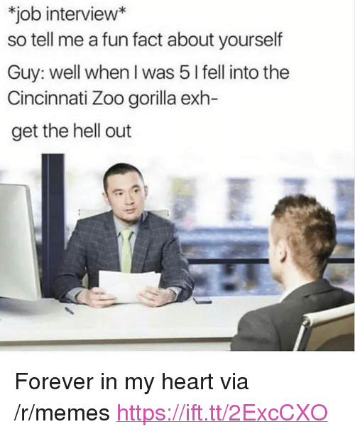 """get the hell out: job interview*  so tell me a fun fact about yourself  Guy: well when I was 5 l fell into the  Cincinnati Zoo gorilla exh-  get the hell out <p>Forever in my heart via /r/memes <a href=""""https://ift.tt/2ExcCXO"""">https://ift.tt/2ExcCXO</a></p>"""