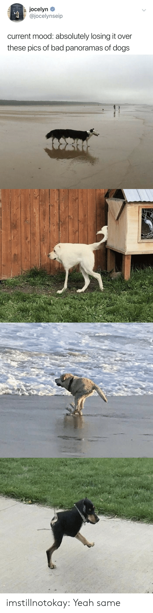 Pics Of: Jocelyn  @jocelynseip  current mood: absolutely losing it over  these pics of bad panoramas of dogs imstillnotokay:  Yeah same