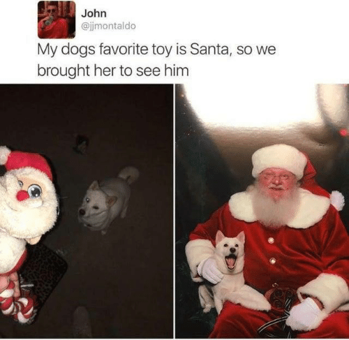 Dank, Dogs, and Santa: John  @jimontaldo  My dogs favorite toy is Santa, so we  brought her to see him
