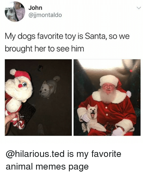 Memes Page: John  @jjmontaldo  My dogs favorite toy is Santa, so we  brought her to see him @hilarious.ted is my favorite animal memes page