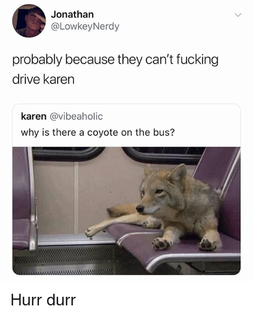 durr: Jonathan  @LowkeyNerdy  probably because they can't fucking  drive karen  karen @vibeaholic  why is there a coyote on the bus? Hurr durr