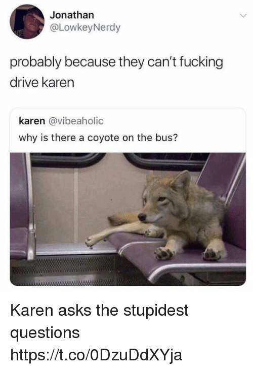 Fucking, Funny, and Coyote: Jonathan  @LowkeyNerdy  probably because they can't fucking  drive karen  karen @vibeaholic  why is there a coyote on the bus? Karen asks the stupidest questions https://t.co/0DzuDdXYja
