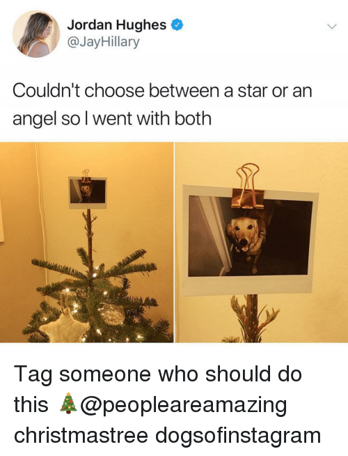 Memes, Angel, and Jordan: Jordan Hughes  @JayHillary  Couldn't choose between a star or an  angel so l went with both Tag someone who should do this 🎄@peopleareamazing christmastree dogsofinstagram