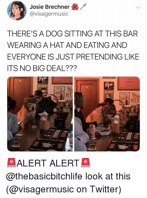 Tots: Josie Brechner  @visagermusic  THERE'S A DOG SITTING AT THIS BAR  WEARING A HAT AND EATING AND  EVERYONE IS JUST PRETENDING LIKE  ITS NO BIG DEAL???  ries or  side wihot dog  Fries or Tots  ALCOHOL  Hot Dog  ALCOHOL  HOT  Hot  15  HOT D  《旨 🚨ALERT ALERT🚨 @thebasicbitchlife look at this (@visagermusic on Twitter)