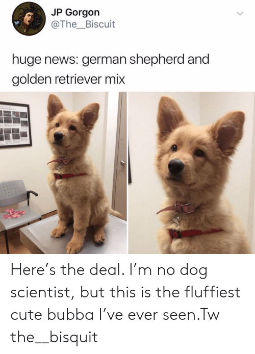 German Shepherd: JP Gorgon  @The_Biscuit  huge news: german shepherd and  golden retriever mix  Havno Here's the deal. I'm no dog scientist, but this is the fluffiest cute bubba I've ever seen.Tw the__bisquit