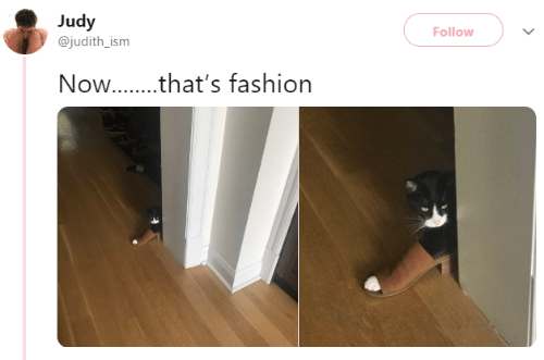 Fashion, Memes, and 🤖: Judy  Follow  @judith_ism  Now...that's fashion