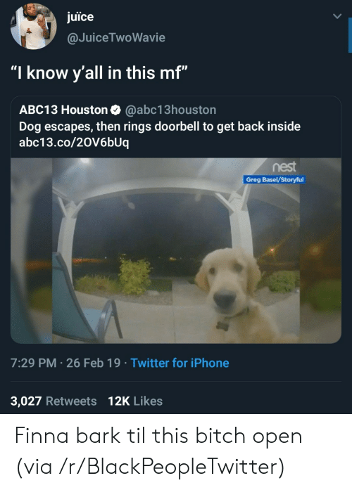 "Bitch, Blackpeopletwitter, and Iphone: juice  @JuiceTwoWavie  ""I know y'all in this mf""  ABC13 Houston Q @abc13houston  Dog escapes, then rings doorbell to get back inside  abc13.co/20V6bUiq  nest  Greg Basel/Storyful  7:29 PM 26 Feb 19 Twitter for iPhone  3,027 Retweets 12K Likes Finna bark til this bitch open (via /r/BlackPeopleTwitter)"