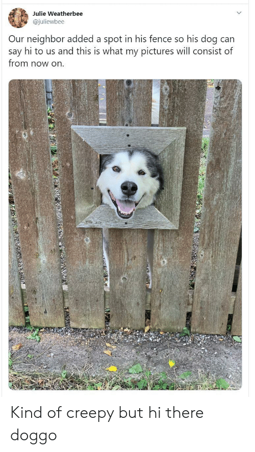Creepy, Pictures, and Doggo: Julie Weatherbee  @juliewbee  Our neighbor added a spot in his fence so his dog can  say hi to us and this is what my pictures will consist of  from now on Kind of creepy but hi there doggo