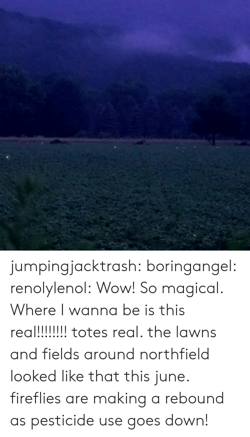 Target, Tumblr, and Wow: jumpingjacktrash: boringangel:  renolylenol:  Wow! So magical. Where I wanna be  is this real!!!!!!!!  totes real. the lawns and fields around northfield looked like that this june. fireflies are making a rebound as pesticide use goes down!