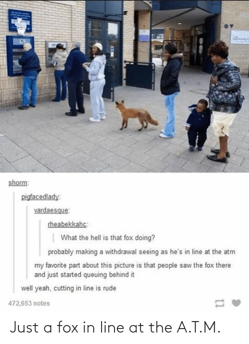 fox: Just a fox in line at the A.T.M.
