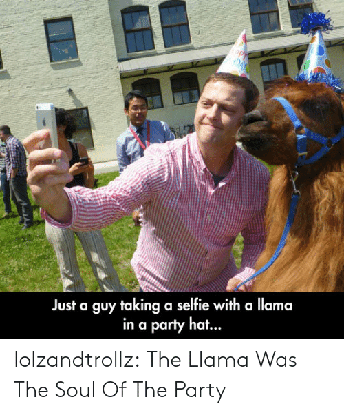 the party: Just a guy taking a selfie with a llama  in a party ha... lolzandtrollz:  The Llama Was The Soul Of The Party