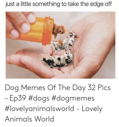 Animals, Dogs, and Memes: just a little something to take the edge off Dog Memes Of The Day 32 Pics – Ep39 #dogs #dogmemes #lovelyanimalsworld - Lovely Animals World
