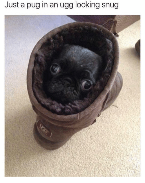 Uggly: Just a pug in an ugg looking snug