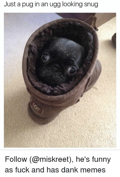 Pug In An Ugg: Just a pug in an ugg looking snug Follow (@miskreet), he's funny as fuck and has dank memes