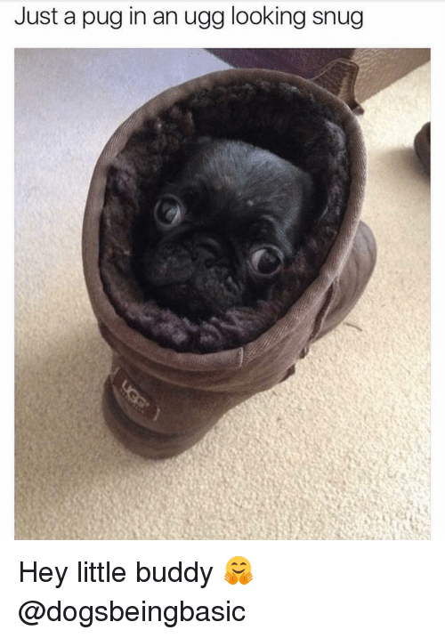 Pug In An Ugg: Just a pug in an ugg looking snug Hey little buddy 🤗 @dogsbeingbasic