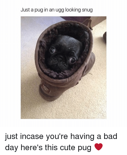 Pug In An Ugg: Just a pug in an ugg looking snug just incase you're having a bad day here's this cute pug ❤️