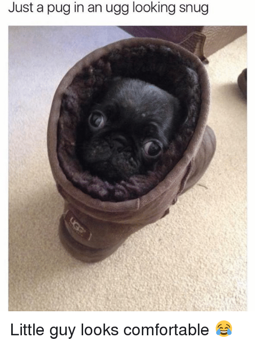 Pug In An Ugg: Just a pug in an ugg looking snug Little guy looks comfortable 😂