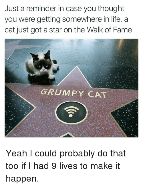 Grumpy Cats: Just a reminder in case you thought  you were getting somewhere in life, a  cat just got a star on the Walk of Fame  GRUMPY CAT Yeah I could probably do that too if I had 9 lives to make it happen.